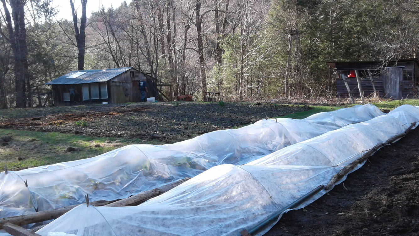 Low Tunnels in spring